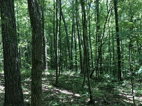 Wooded Hunting Tract : Cullman : Alabama