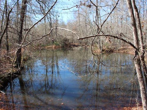 Deer Hunter's Dream : Abbeville : Wilcox County : Georgia