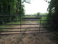 30 Acres Recreational Property : Moundville : Hale County : Alabama