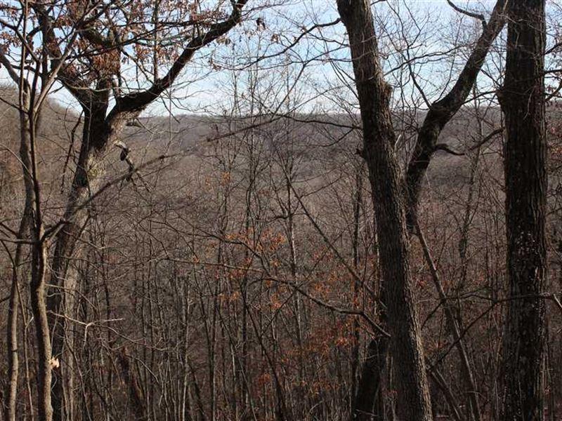Nice 77.5 Acre Hunting Tract Camde : Camdenton : Camden County : Missouri