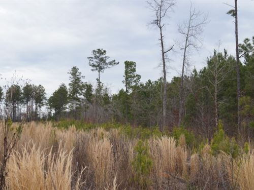 45 Acres - Kershaw County, Sc : Lugoff : Kershaw County : South Carolina