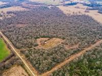 85 Acres In Centerville, Texas : Centerville : Leon County : Texas