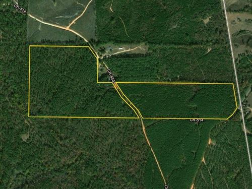 Town Creek Timber And Hunting Tract : Woodland : Randolph County : Alabama
