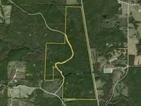 Town Creek Timber And Hunting Tract : Woodland : Randolph County : Alabama