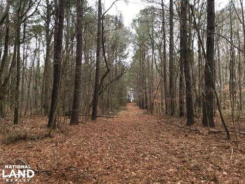 Mercer Mill Hunting Land With Timbe : Clarkton : Bladen County : North Carolina