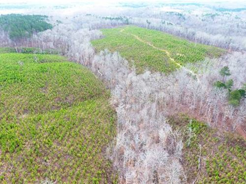Incredible Hunting Tract Near Russ : Mount Hope : Franklin County : Alabama