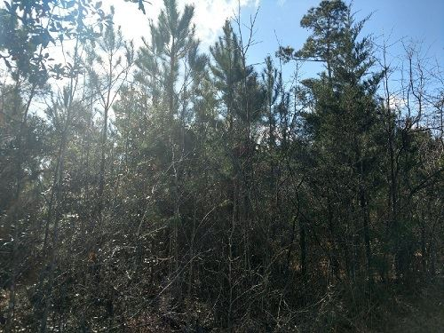 193 Acres Timberland I Dale Co : Ozark : Dale County : Alabama