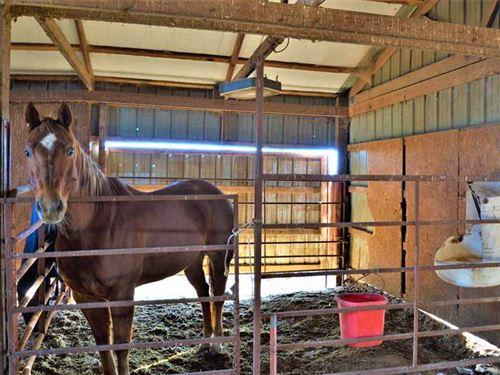 Development Potential/Cattle Farm : Bentonville : Benton County : Arkansas