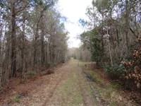 Ireland Creek Tract : Walterboro : Colleton County : South Carolina