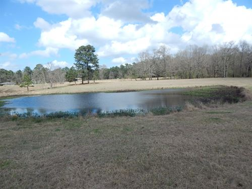 20 Acres Of Pristine Pasture Land : McComb : Pike County : Mississippi