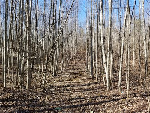 48.72+/-Acres Perfect Get-A-Way : Palmer : Marion County : Tennessee