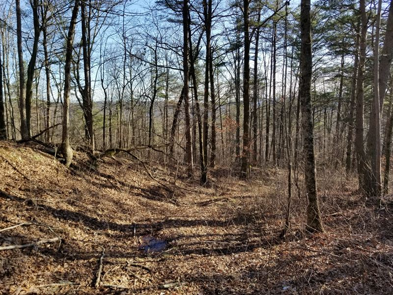 74.03+/-Acres Hunting Property : Palmer : Marion County : Tennessee