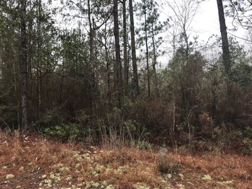 44 Acres In Forrest County, Ms : Brooklyn : Forrest County : Mississippi