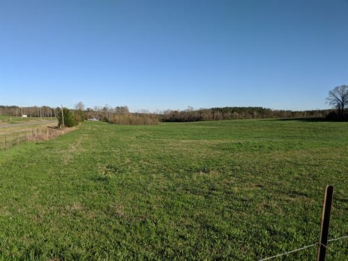 27+/- Acres Pastureland : Wadley : Clay County : Alabama