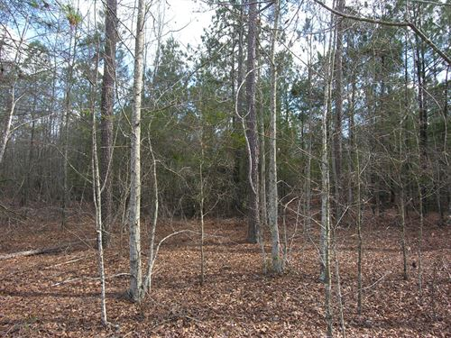 156 Ac, Will Divide,Owner Financing : Blythe : Burke County : Georgia