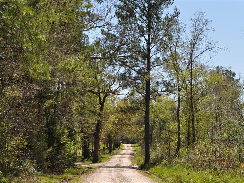 19 Ac Jordy Road : Huntsville : Walker County : Texas