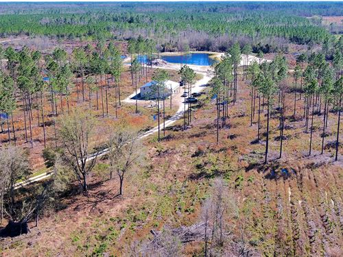 Timber And Hunting Land In Madison : Madison : Florida