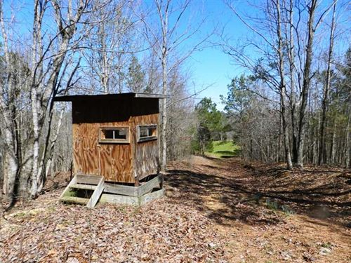Quiet 43 Acres For Living And/Or : Cherokee : Colbert County : Alabama