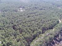 Great Satilla Preserve Lot 36 : White Oak : Camden County : Georgia