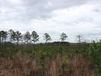 Small Acreage Recreational Property : Butler : Taylor County : Georgia