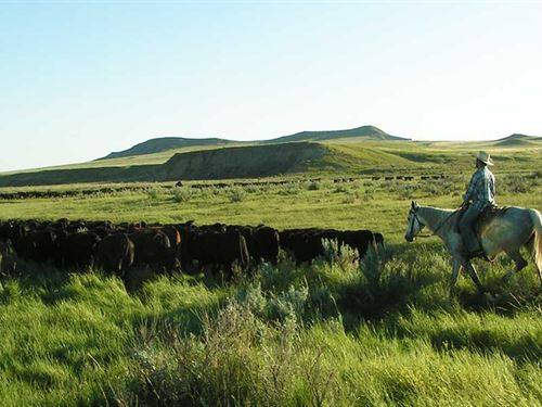 Cinch Buckle Ranch : Broadus : Powder River County : Montana
