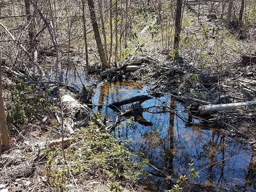 Morris Tract 40+/- Acres : Ashland : Clay County : Alabama