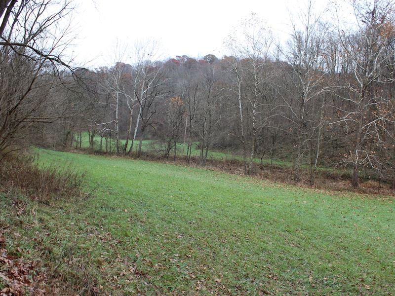 Old Camp Rd - 48 Acres : New Matamoras : Washington County : Ohio