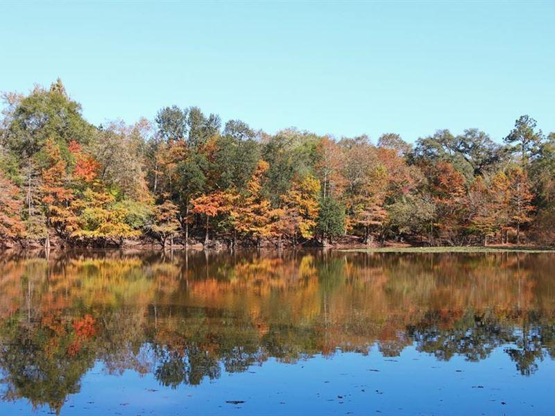 River Wonderland : Thomasville : Thomas County : Georgia