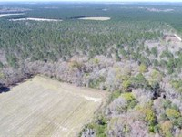 Recreational Timberland For Sale : Bickley : Ware County : Georgia