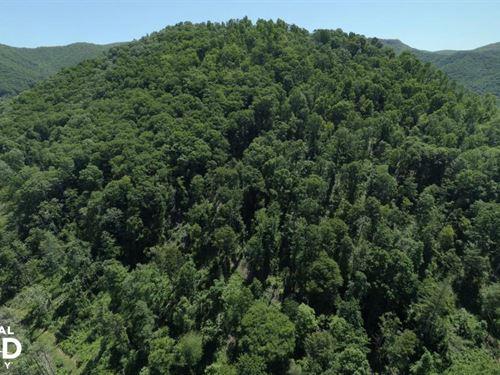 High Mountain Views And Hunting : Bakersville : Mitchell County : North Carolina