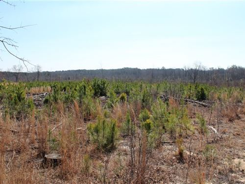 70 Acres - Chesterfield County, Sc : Ruby : Chesterfield County : South Carolina