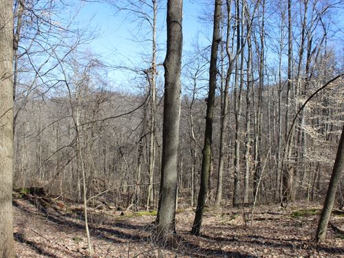 Beagle Club Rd - 11 Acres : Scio : Harrison County : Ohio