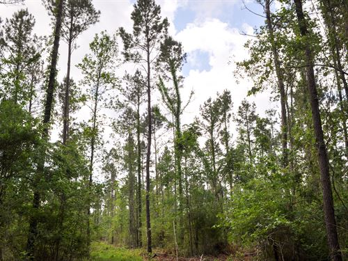58.4 Ac Dick Skinner Road : Corrigan : Polk County : Texas