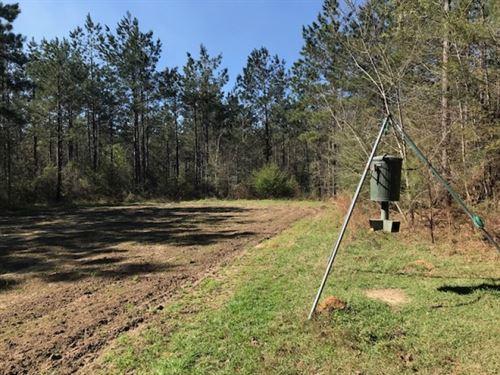 40 Ac Hunting Tract On Stateline : Angie : Washington Parish : Louisiana