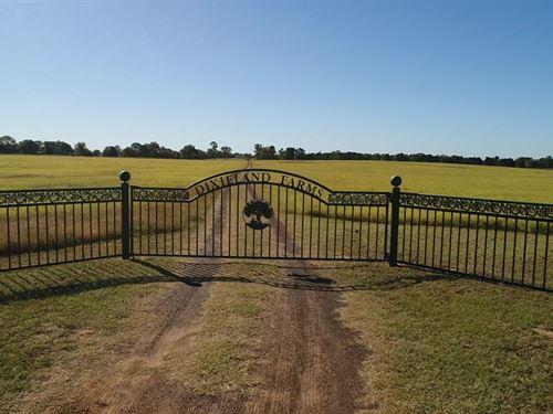 Dixieland Farms : Grapeland : Houston County : Texas