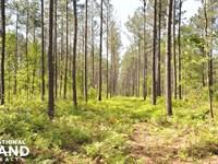 St. Pauls Hunting & Timber Investme : Saint Pauls : Robeson County : North Carolina