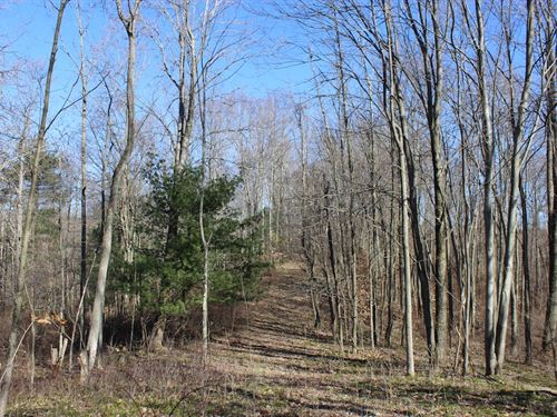 Beagle Club Rd - 20 Acres : Scio : Harrison County : Ohio