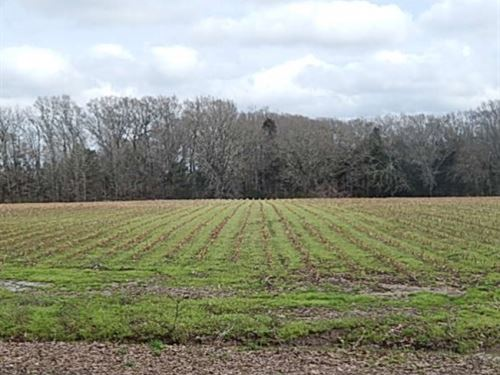 80 Acres In Yazoo County In Benton : Benton : Yazoo County : Mississippi