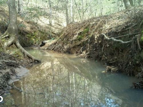 Polk County Hunting/Timberland Trac : Livingston : Polk County : Texas