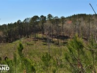 Oak Grove Road Timber Investment an : Fayette : Fayette County : Alabama