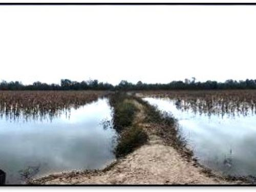 50 Acres In Tallahatchie County : Charleston : Tallahatchie County : Mississippi