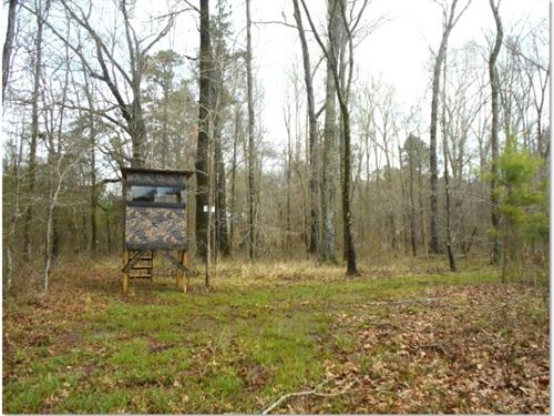 67.13 Acres In Scott County In Mort : Morton : Scott County : Mississippi