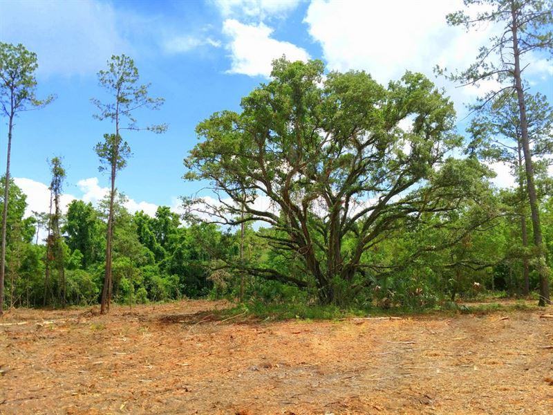 12 Acres In Prime Hwy 225 Location : Reddick : Marion County : Florida