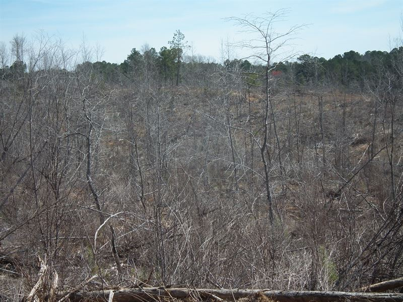 Pinishook Creek : Noxapater : Winston County : Mississippi