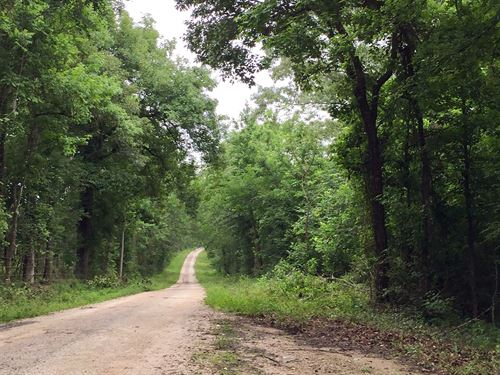 181 Acres On Stephen Creek : Coldspring : San Jacinto County : Texas