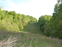 Collier Rd - 109 Acres : South Webster : Scioto County : Ohio