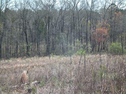 Penders Creek : Dekalb : Kemper County : Mississippi