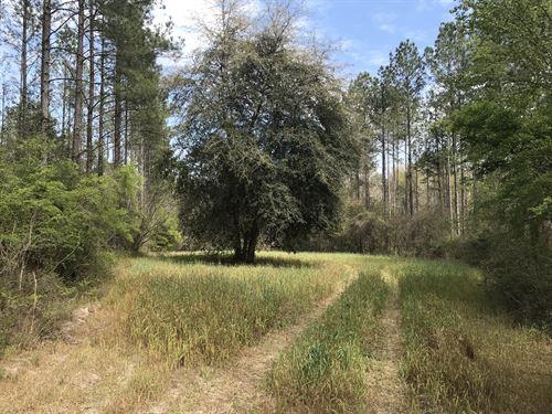 Riverbend 177 : Tallahassee : Gadsden County : Florida