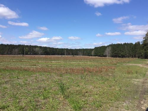 Easterlin Farm - Dove Feld, Timber : Varnville : Hampton County : South Carolina