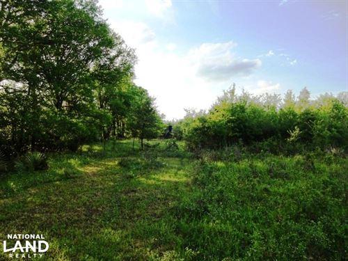 Trees, Pasture, Abundant Wildlife : Midway : Madison County : Texas